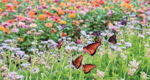 15_Butterflies