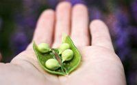 peas(1)