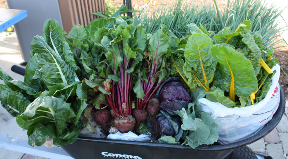 share-harvest